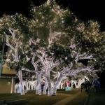 Yılbaşı Ağacı Süsleme 2016 5